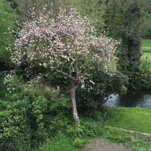 About Work from Home Wisdom - apple tree