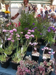 The Frome Independent - plant stall
