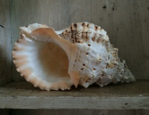 Cornish holiday cottages - The Studio, St Ives - shell
