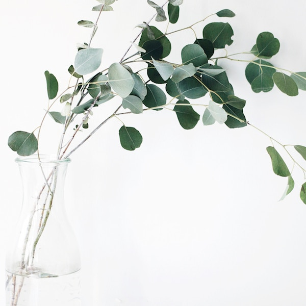 Write a will - eucalyptus