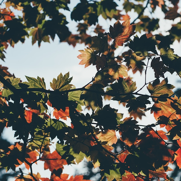 Keep the joy in your business - autumn leaves