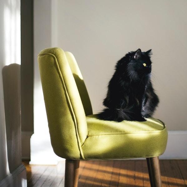 Freelancers - cat